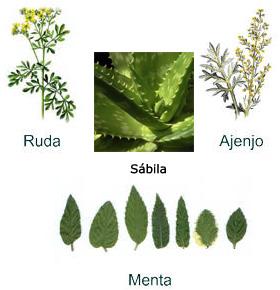 Junio 2011 for Tipos de hierbas medicinales